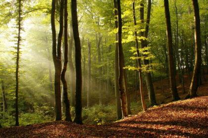 En forêt - L'ami de la nature