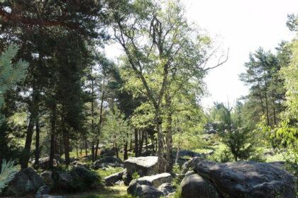 Massif de Fontainebleau de J. Loiseau -Titel